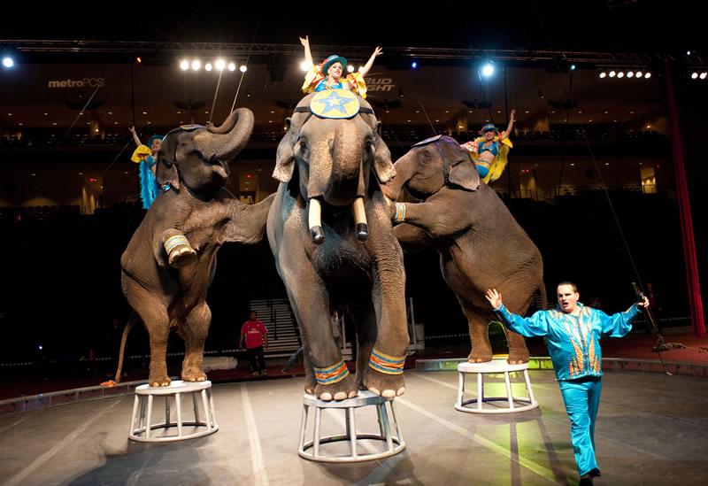 circus-belle-clair-fairgrounds